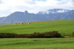 Bauernhof-Szene im Overberg - dem Südafrika Lizenzfreie Stockfotos