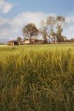 Bauernhof und Feld Lizenzfreie Stockbilder