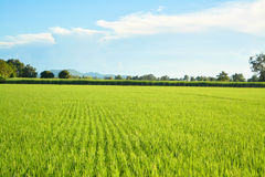 Bauernhof und Himmel stockfoto