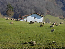 Bauernhof und Menge der Schafe im Tal von Baztán Stockbild