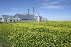Bauernhof und Raps Stockfoto