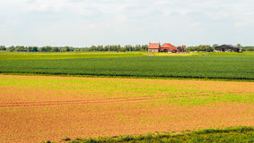 Bauernhof und Scheune auf einem terp in einem neuen niederländischen Polder Lizenzfreies Stockbild