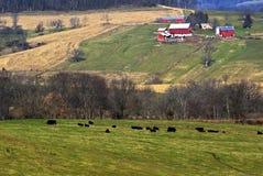 Bauernhof und Weide Lizenzfreie Stockfotos