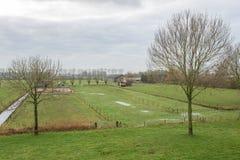Bauernhof und Wiese in den Niederlanden Lizenzfreies Stockbild