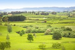 Bauernhof-Weide in Neuseeland lizenzfreies stockbild