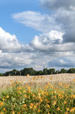Bauernhof-Weizenfeld Missouris USA Lizenzfreies Stockfoto