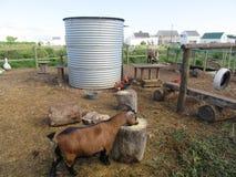 Bauernhof-Yard-Spaß Stockbilder
