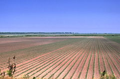 Bauernhoffeld Stockfoto