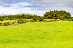 Bauernhoffeld im Greenwayweg von Castlebar zu Westport lizenzfreie stockbilder