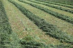 Bauernhoffeld mit dem Heu, das eingeschnitten wird, rudert Stockbilder