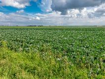 Bauernhoffeld und Windkraftanlagen, Flevoland, die Niederlande Lizenzfreie Stockfotografie