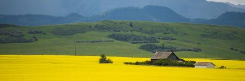 Bauernhofhaus auf dem Gebiet von canola Stockfoto
