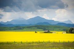 Bauernhofhaus auf dem Gebiet von canola Lizenzfreies Stockfoto