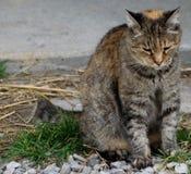 Bauernhofkatze, die im Gras sitzt Stockfoto