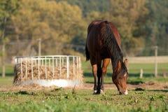 Bauernhofpferd Lizenzfreie Stockfotos