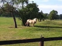 Bauernhofpferd in der Natur lizenzfreie stockbilder