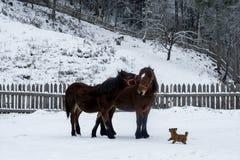 Bauernhofpferd in der Natur Stockfoto
