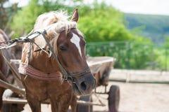 Bauernhofpferd in der Natur Lizenzfreie Stockfotos