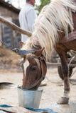 Bauernhofpferd in der Natur Lizenzfreies Stockbild