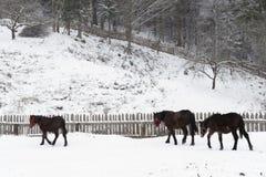 Bauernhofpferde im Schnee lizenzfreies stockfoto