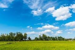 Bauernhofreis und Wolkenhimmel Lizenzfreie Stockfotografie
