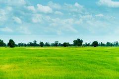 Bauernhofreis und Wolkenhimmel Lizenzfreie Stockfotos