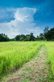 Bauernhofreislandschaft und Wolkenhimmel Lizenzfreie Stockfotografie