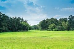 Bauernhofreislandschaft und Wolkenhimmel Stockfotos