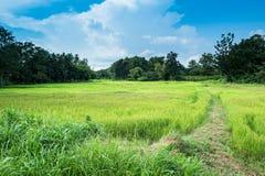 Bauernhofreislandschaft und Wolkenhimmel Stockfoto