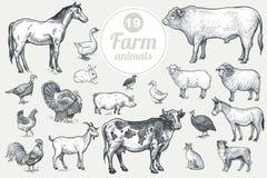 Bauernhofviehbestand- und -geflügelsatz Stockfotos