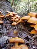 Bauernhofwachstum von Pilzen stockfotos