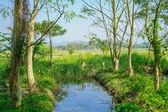 Bauernhofwasserabfluß umgeben durch Bäume und Felder Stockbild