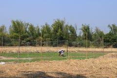Bauernschaft Stockbild