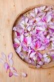 Bauhinia petals Royalty Free Stock Image