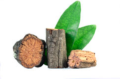 Bauhinia strychnifolia Craib. Royalty Free Stock Photo