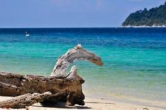 Bauholz auf einem schönen Strand Stockbilder