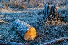 Bauholz, bedeckt mit Frost Stockbild