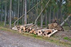Bauholz bereit zum Transport, Süd-Böhmen Lizenzfreies Stockbild