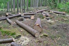 Bauholz bereit zum Transport, Süd-Böhmen Stockfoto