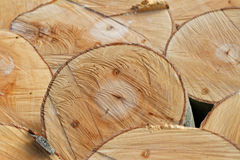 Bauholz-Beschaffenheiten: Querschnitt von frisch gefällten Buchen-Stämmen Lizenzfreie Stockbilder