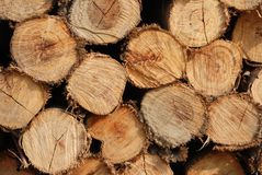 Bauholz des Eukalyptusbaums Lizenzfreies Stockbild