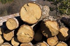 Bauholz des Koniferenstapels in einem Berg Lizenzfreie Stockfotos