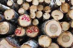 Bauholz: Ein Stapel von Klotz oder von Brennholz mit jährlichen Wachstumsringen und dem Sprühfarbemarkierungsdarstellen stockfoto