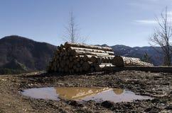 Bauholz in einem Hügel im Rhodope-Berg Lizenzfreies Stockfoto