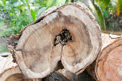 Bauholz für Brennholz Stockfotos