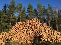 Bauholz im Wald Stockbild