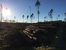 Bauholz im Wald Stockfoto