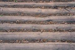 Bauholz mit toter Bodenabdeckung lizenzfreie stockfotografie
