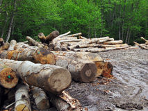 Bauholz sah, vom Wald zu schneiden Lizenzfreies Stockbild