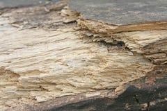 Bauholz verfallen im Wald lizenzfreie stockfotos
